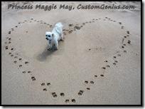 princess-maggie-may-maltese-customgenius.com